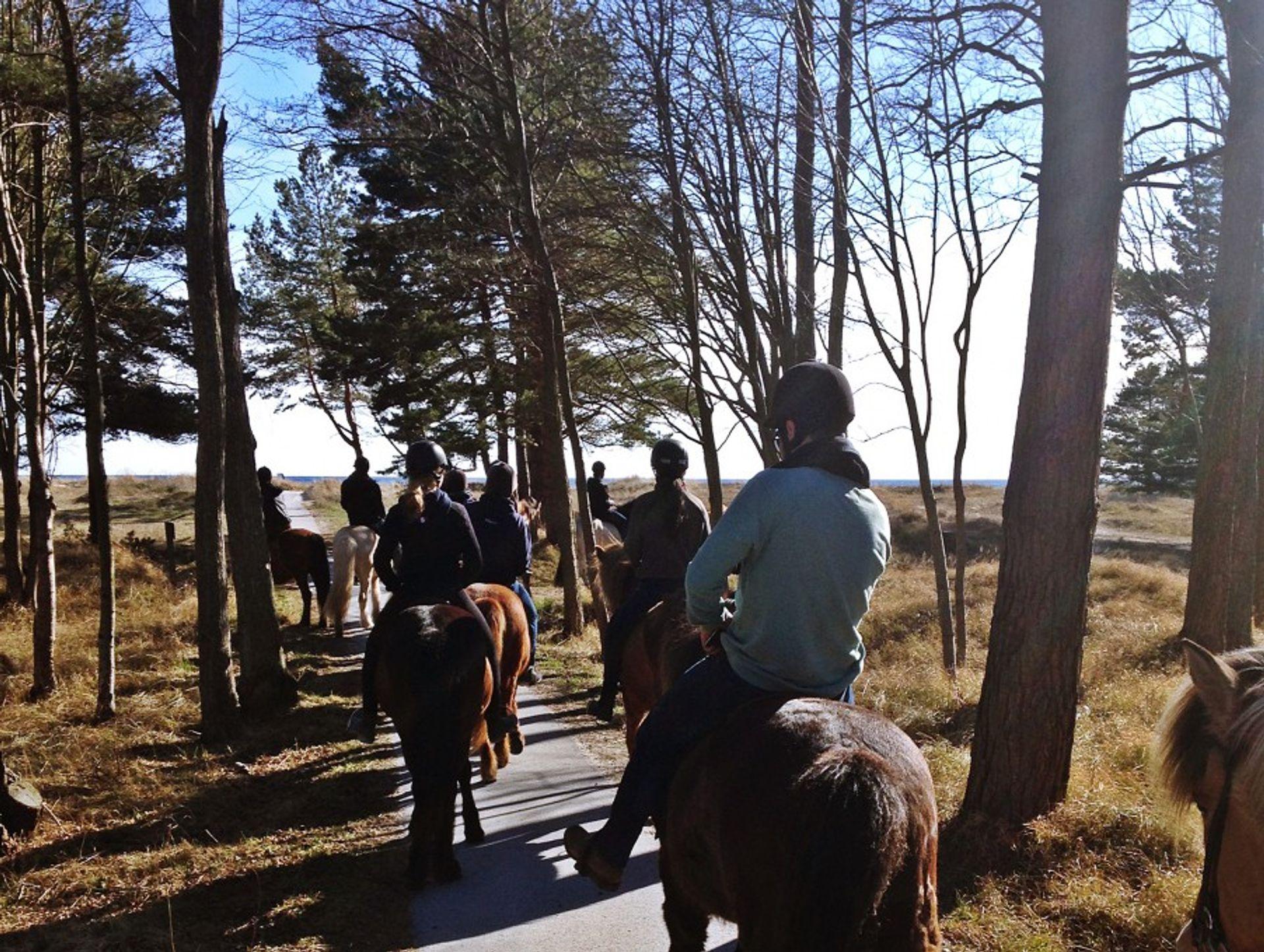 Horse riding through the forest in Fårö