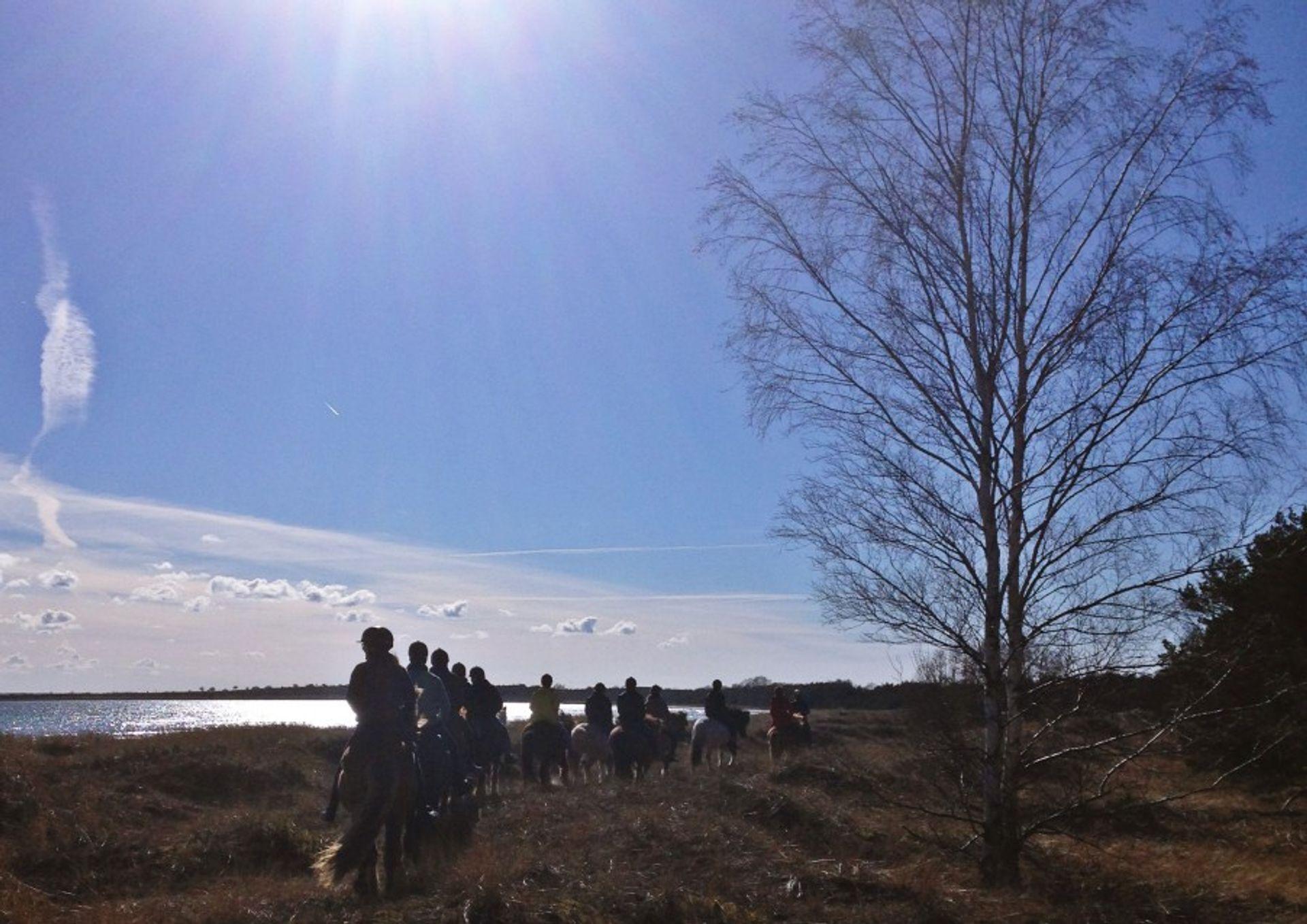 Riding on Icelandic horses in Fårö