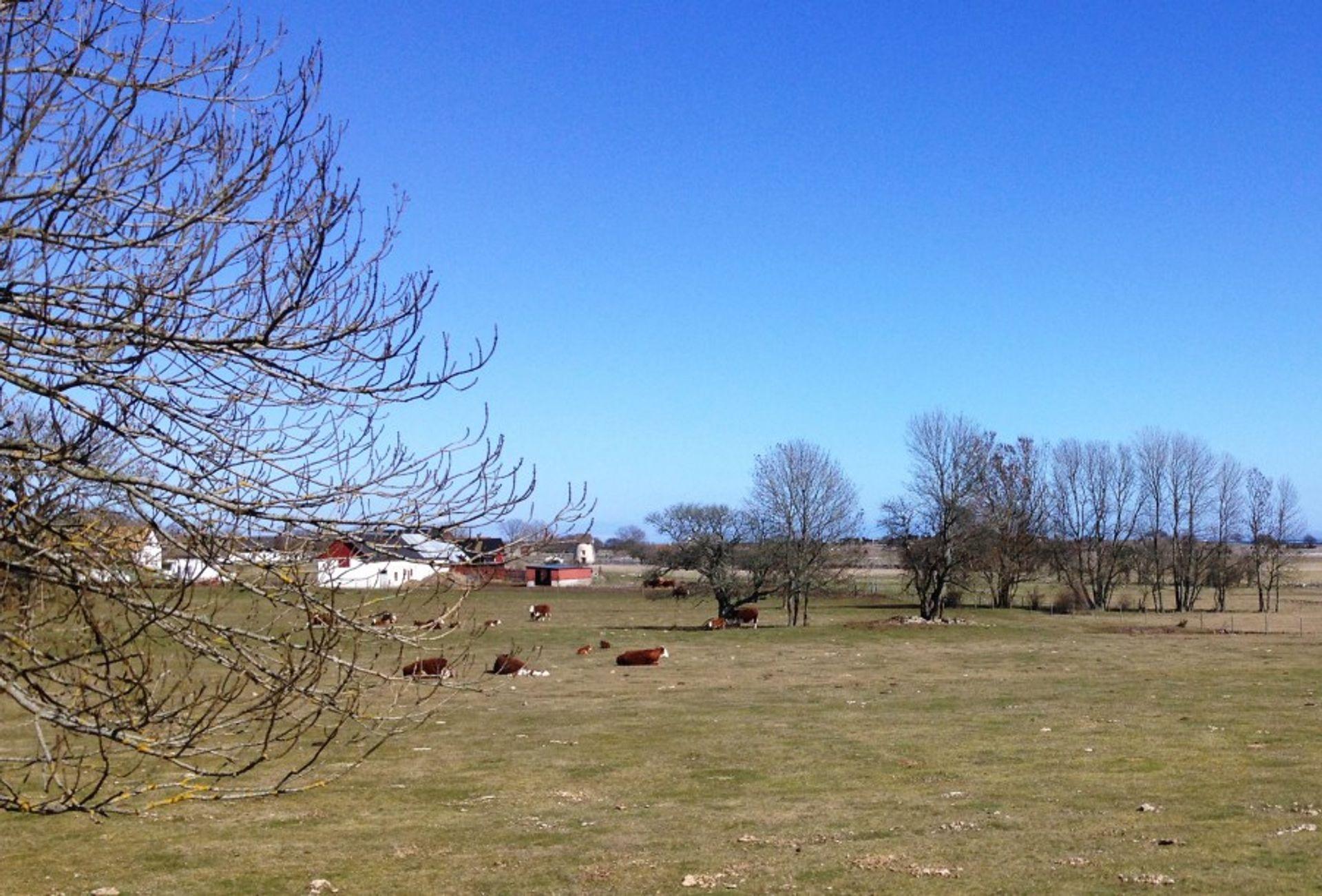 farm in Fårö