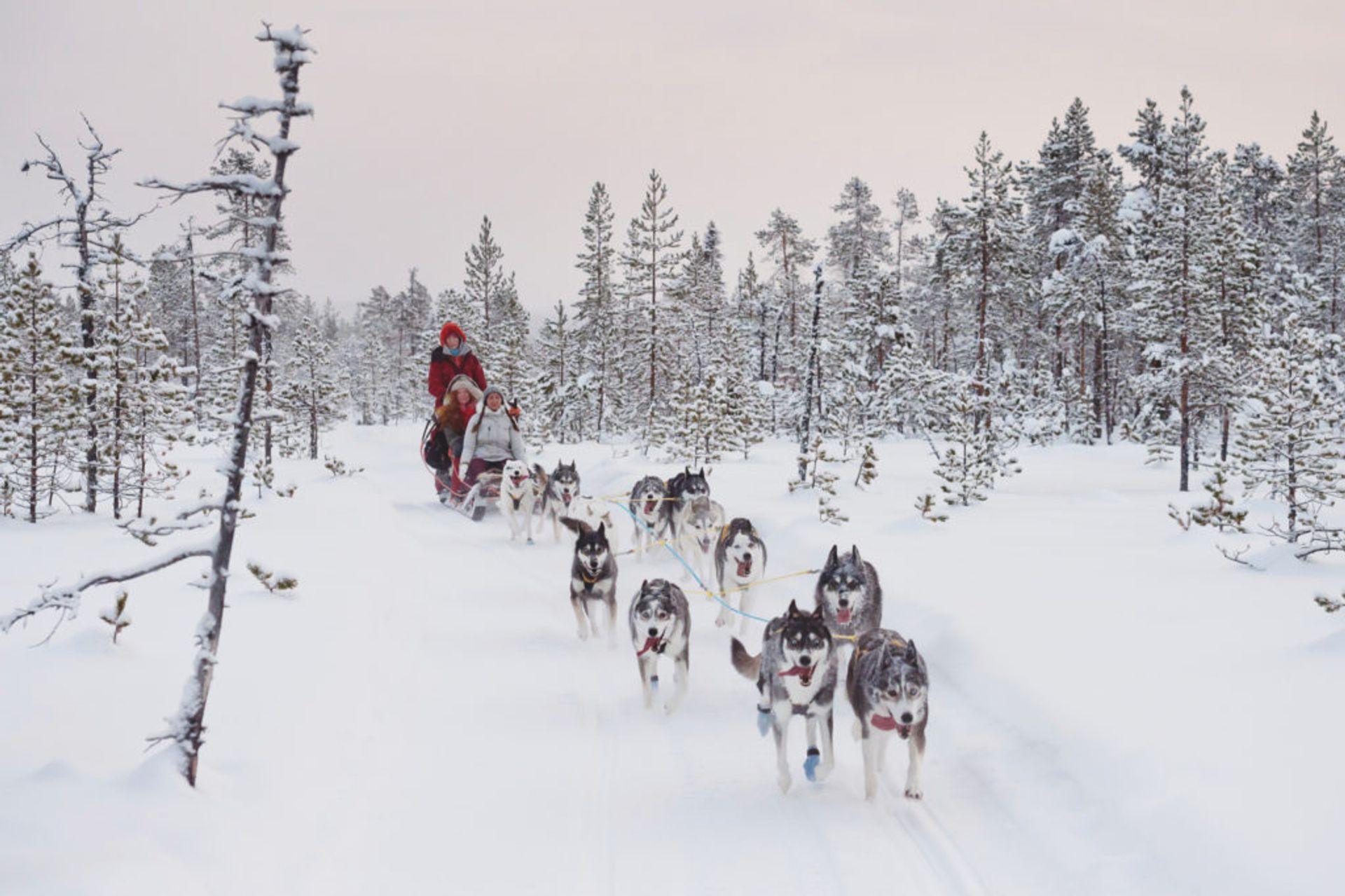 Dog sledding in a snowy forest.