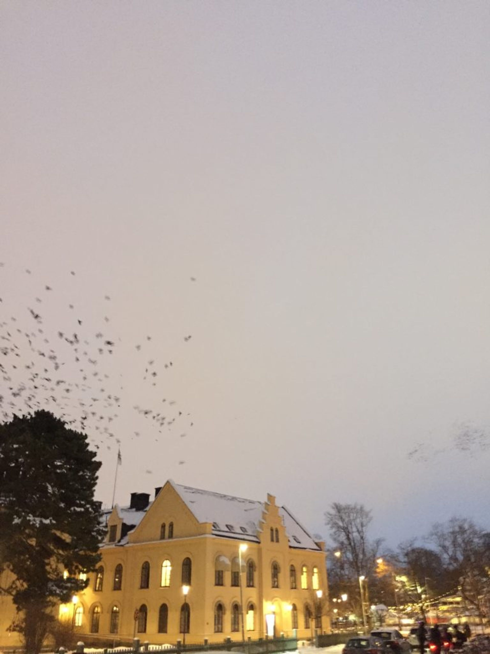 Birds flying above a building.