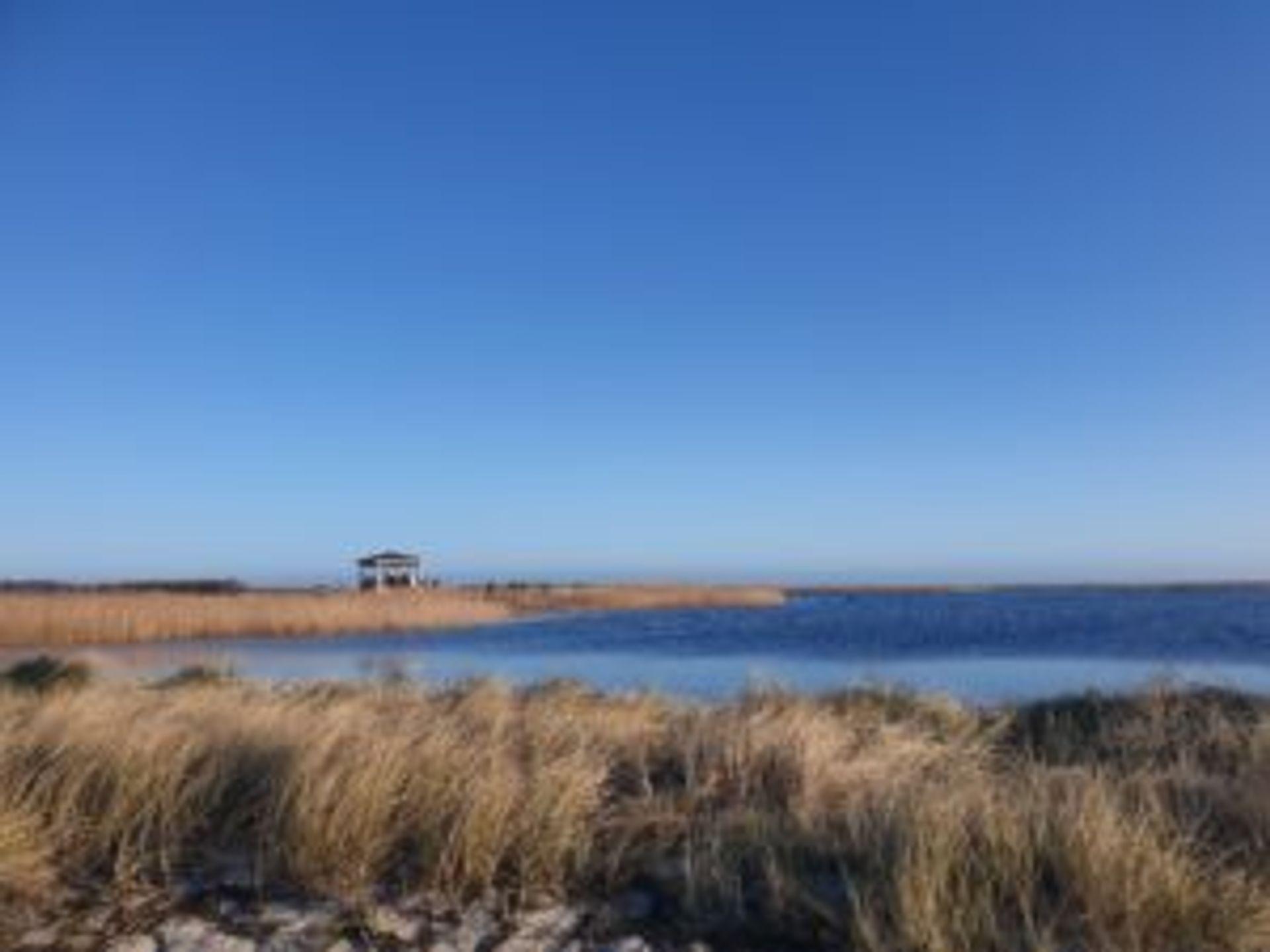 Beachgrass and water.