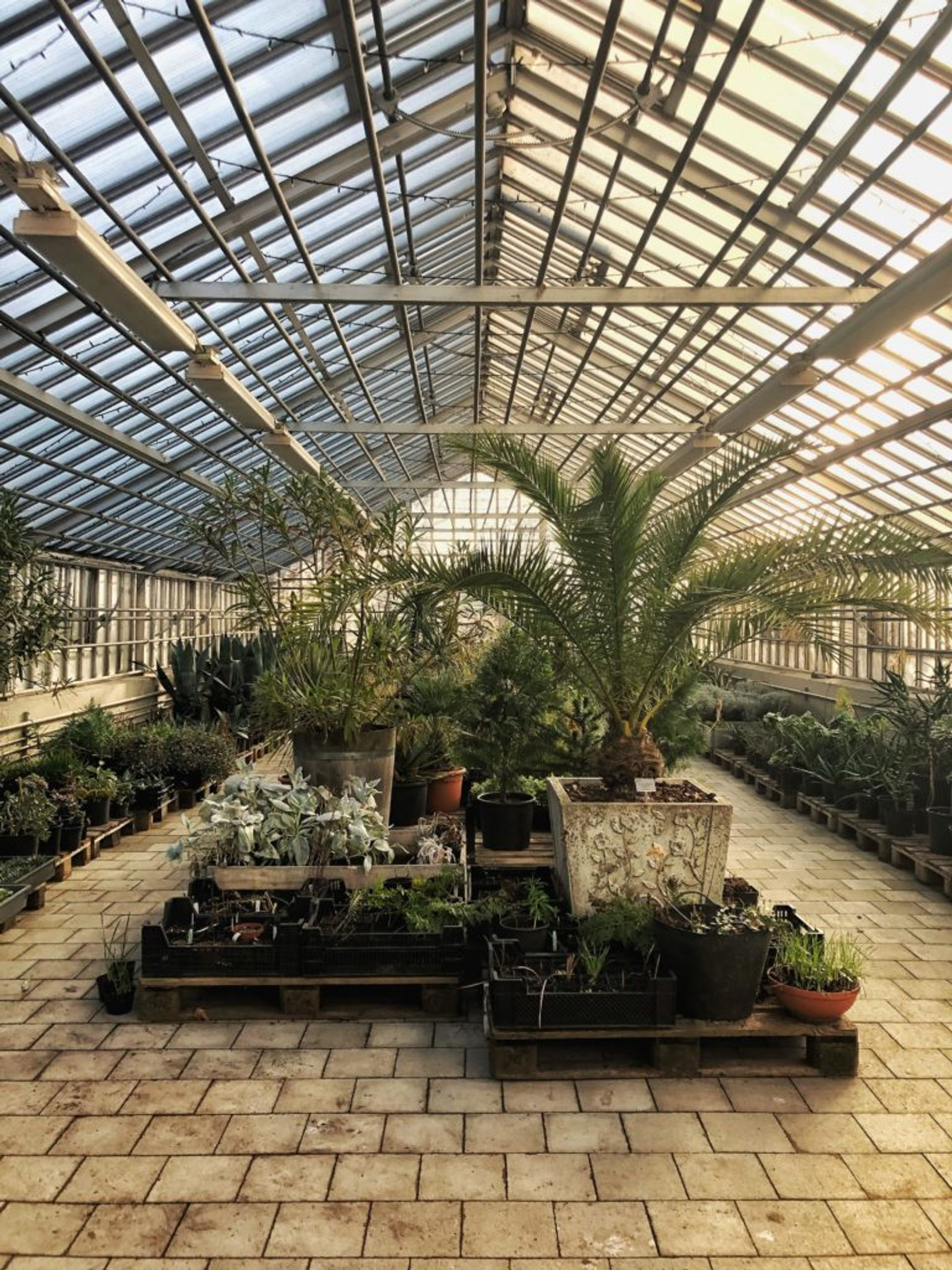 Tropical plants inside a large greenhouse.