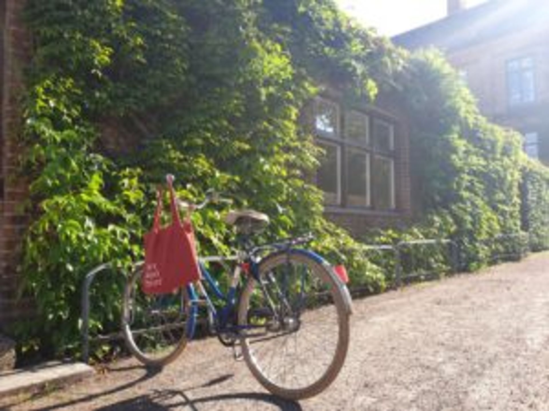 A blue bike parked in bicycle stands outside of a ivy-covered building.