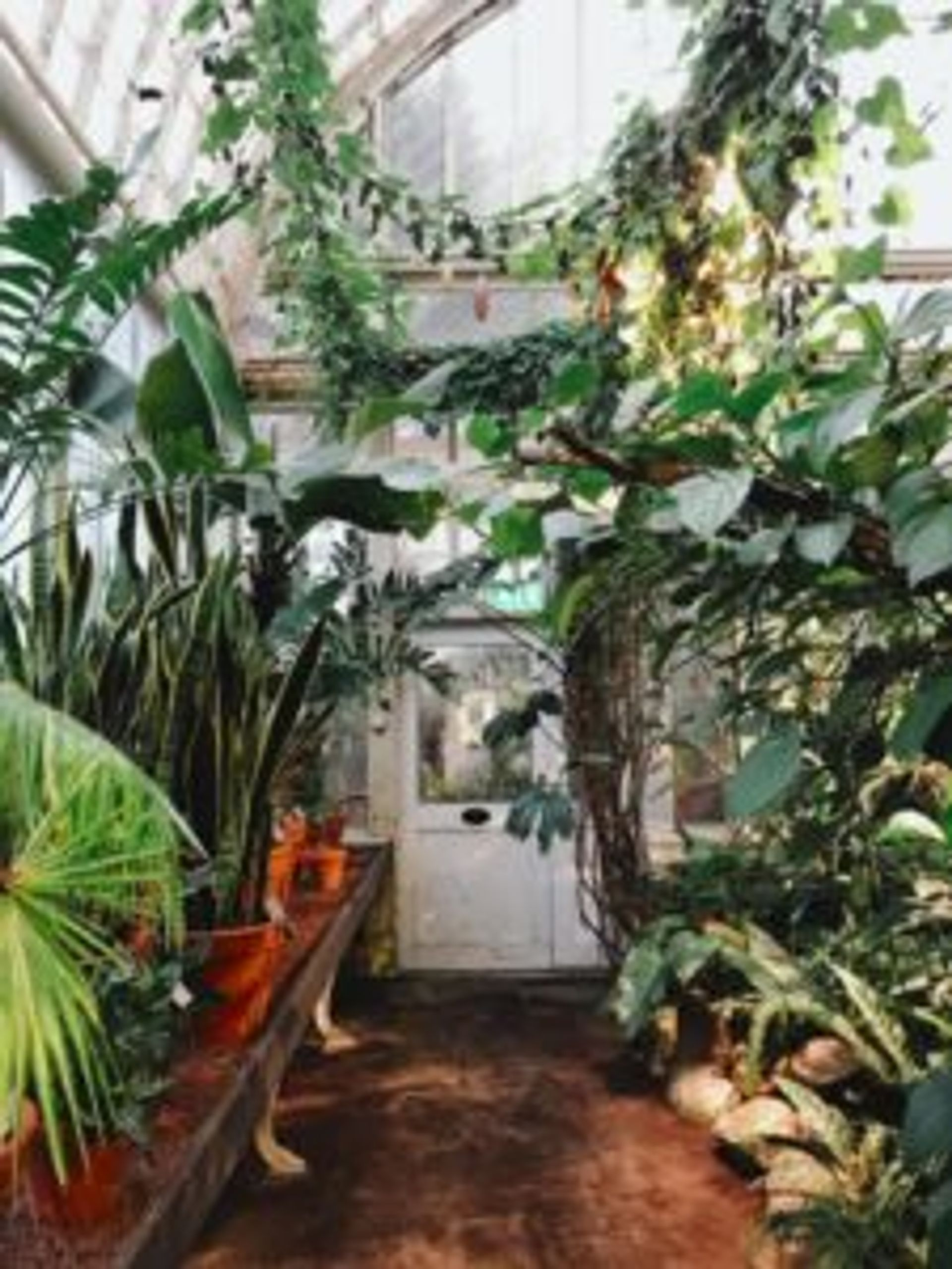 Tropical plants in a greenhouse.