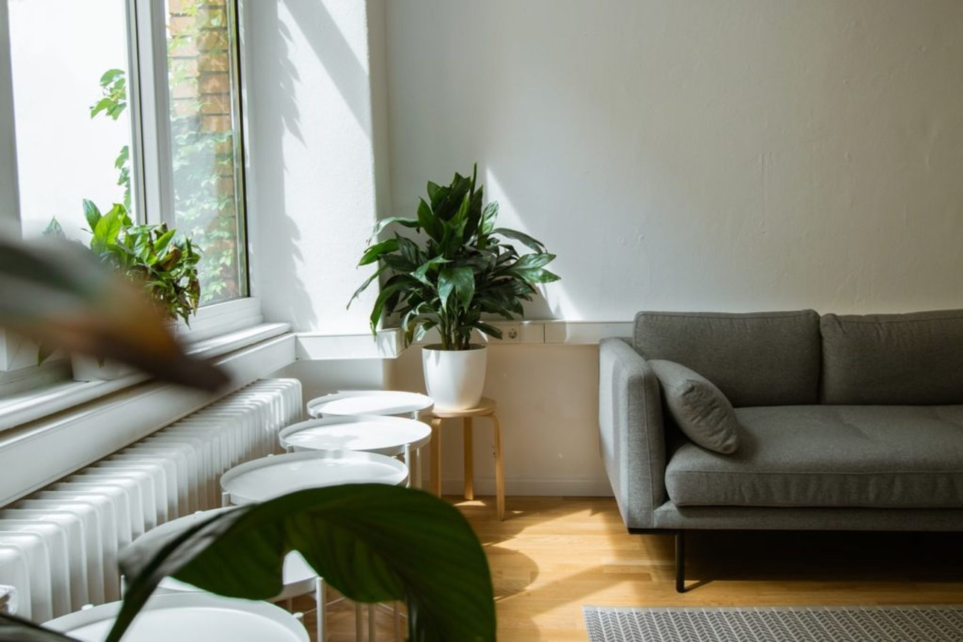 A grey sofa and plants beside a window.
