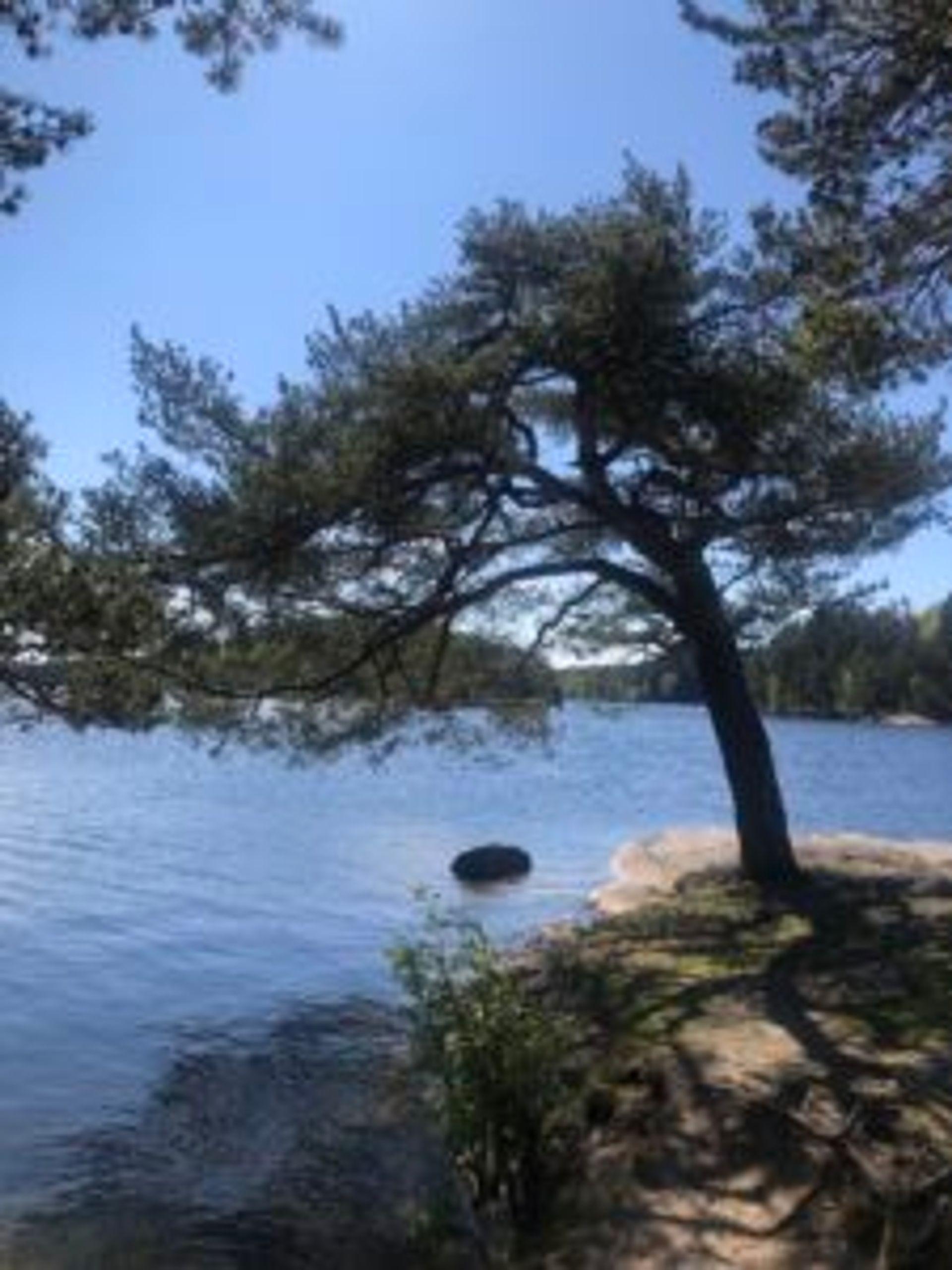 A tree beside the lake.