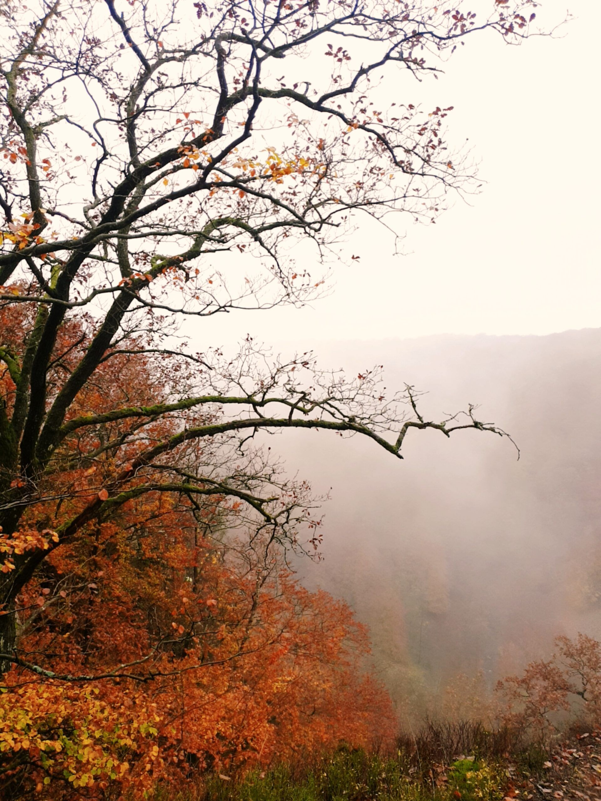 Trees covered with orange and brown leaves overlooking a misty valley.