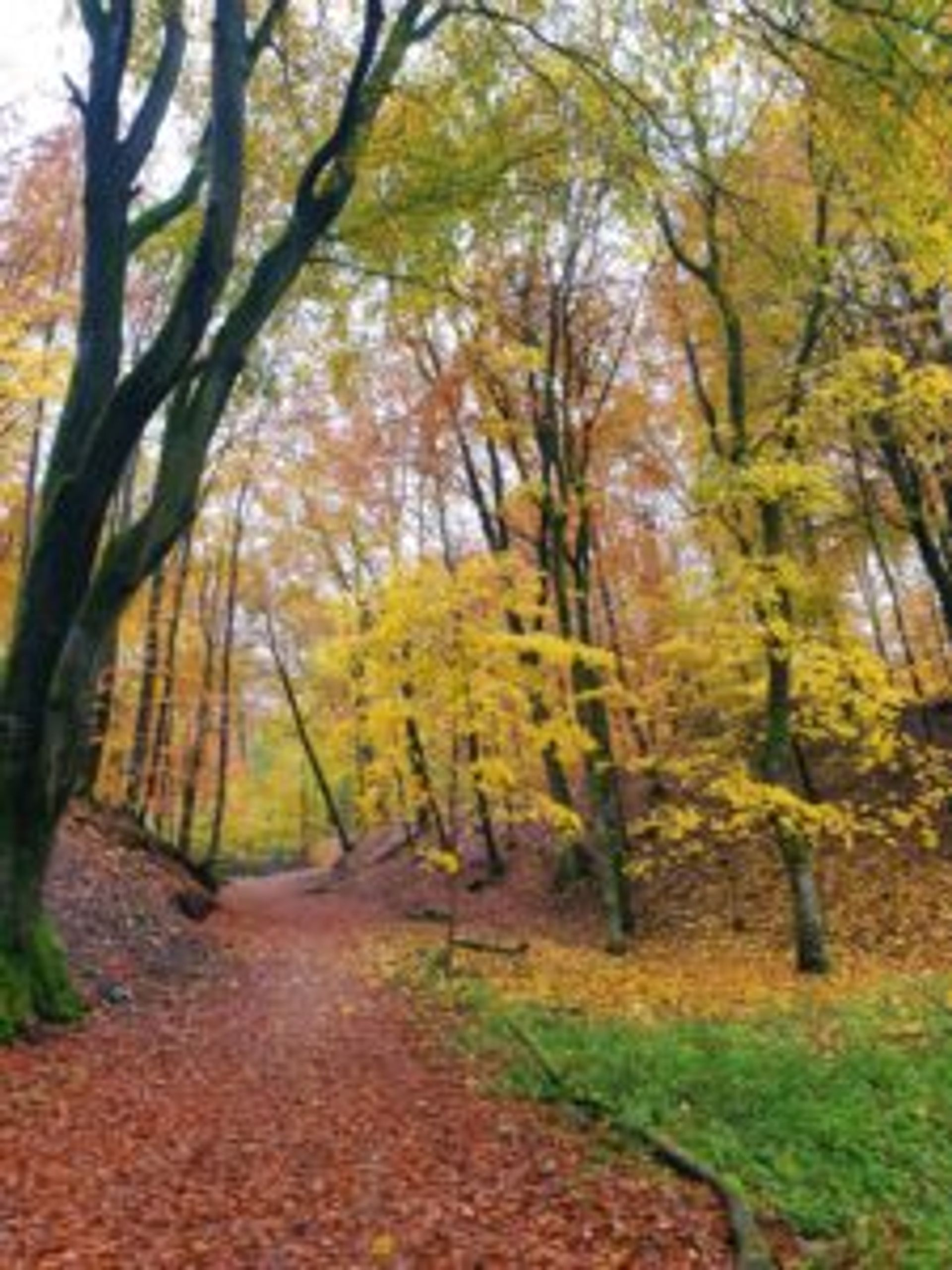 A trail covered by orange and brown leaves in the Söderåsen National Park.