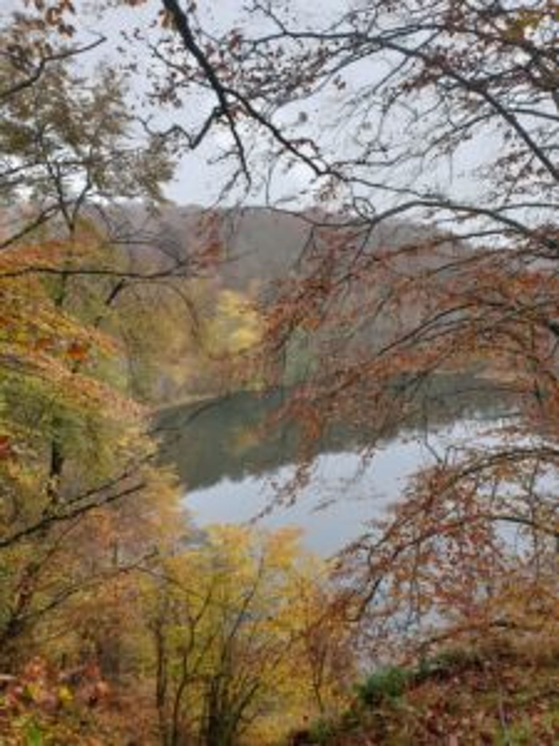 A lake surrounded by trees covered in brown and orange leaves.