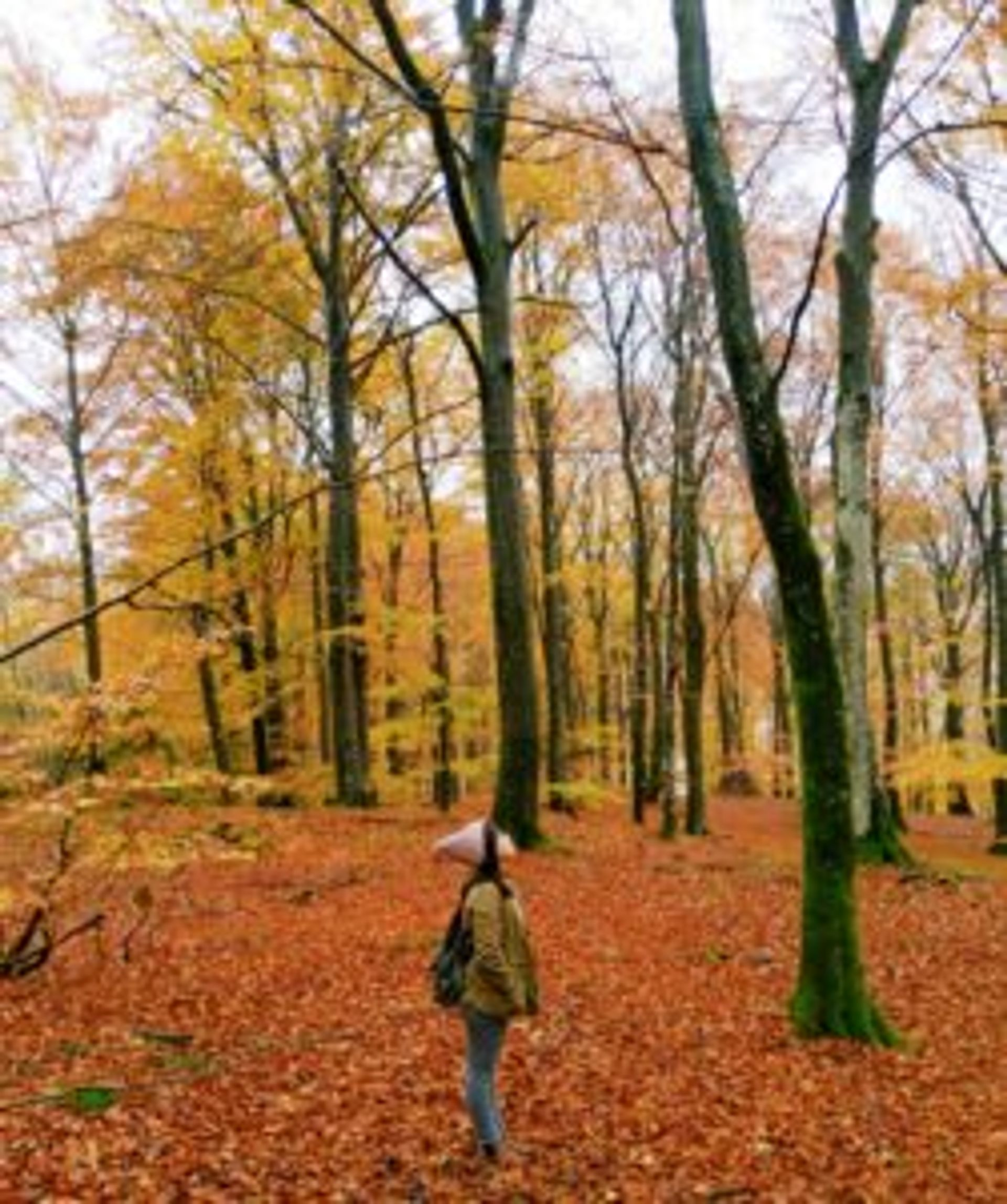 Nguyên standing in the middle of the forrest. The ground is covered by fallen orange and brown leaves.