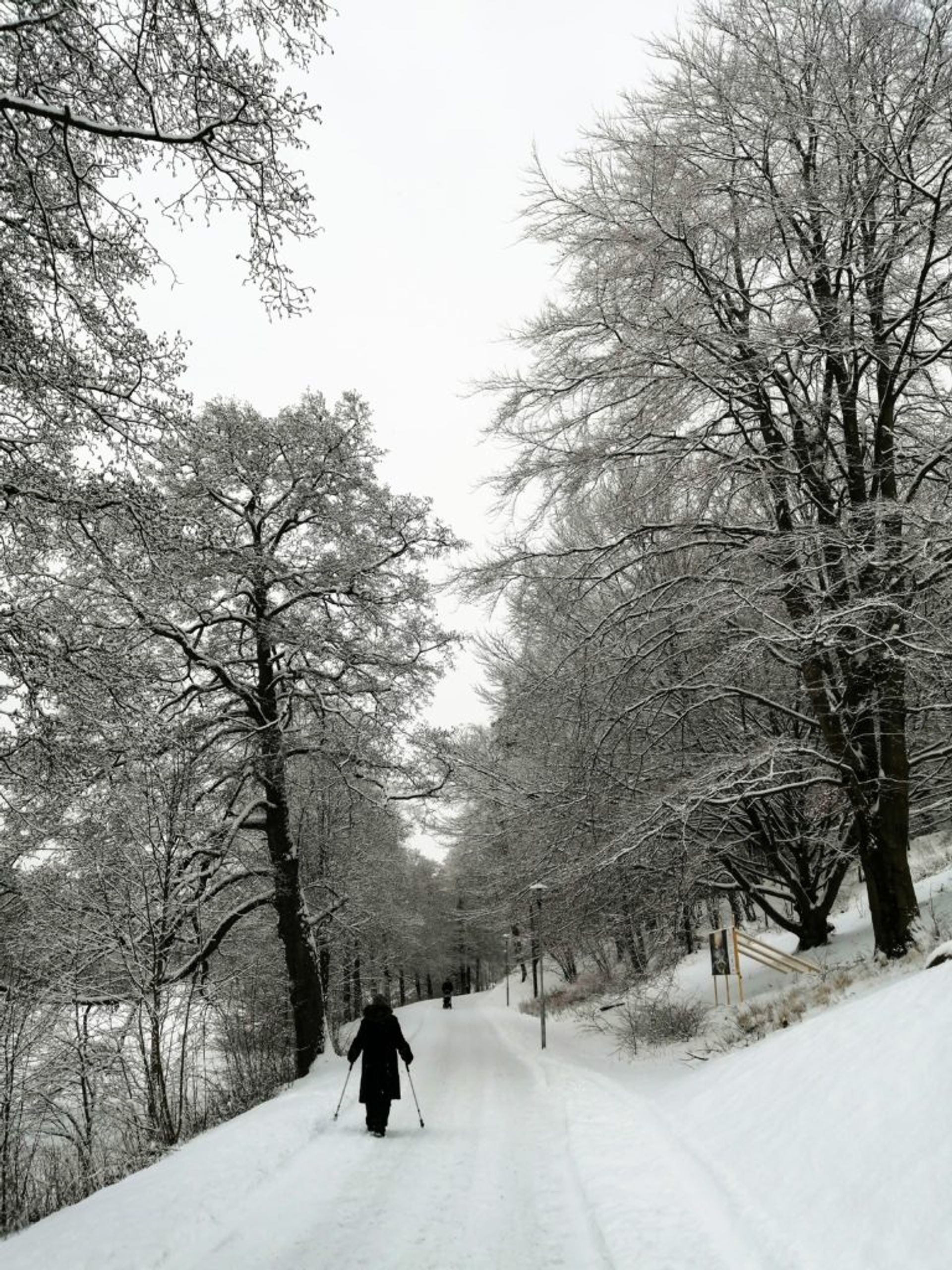 Snowed-over forest path, tall black trees covered with snow and a person in the foreground walking on the path, wearing black winter clothes