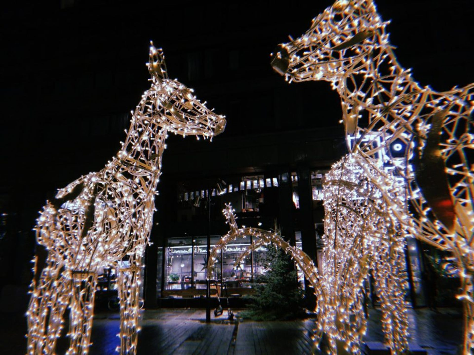 Two sculptures of deer, made from white and yellowish fairy lights, illuminated as photo was taken in the dark during the evening. A glass front building and shop window are visible in the the background